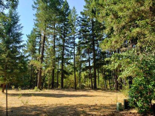 157 Enchanted, Cave Junction, OR 97523 (#3008218) :: FORD REAL ESTATE