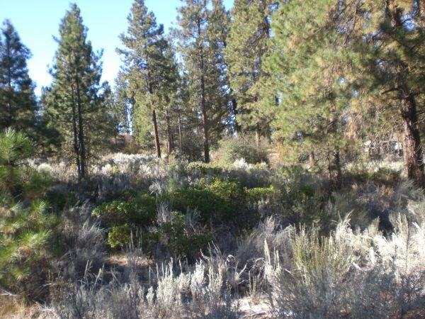 0-LOT 5 Legget, Chiloquin, OR 97624 (#K88089) :: FORD REAL ESTATE