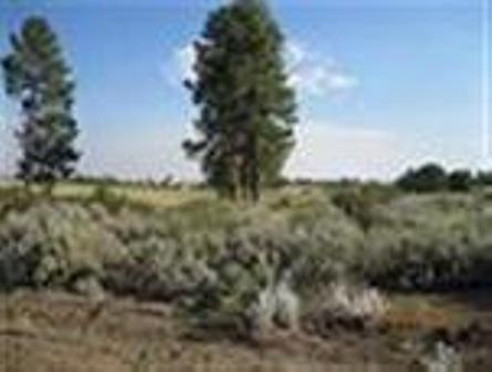 0 Shoreview Lot 15, Chiloquin, OR 97624 (#2978082) :: Rocket Home Finder