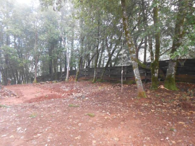 230 Fir, Cave Junction, OR 97523 (#2997332) :: FORD REAL ESTATE