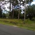 1013 Hammacher Avenue - Photo 3