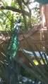 8701 Camelia Court - Photo 13