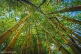 3205 Treetop Drive - Photo 62