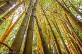 3205 Treetop Drive - Photo 64