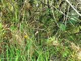 0 Unknown- Corner Of Elk/Fox Trl - Photo 1