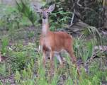 000 Corner Of Deer Run Rd & Trout - Photo 18
