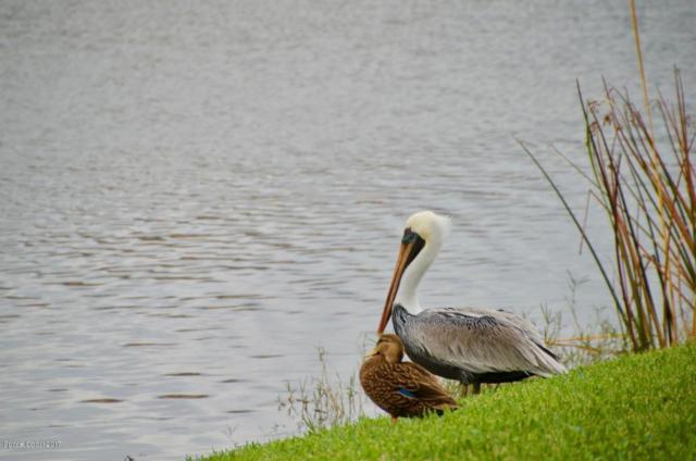 730 Hannah Drive, Merritt Island, FL 32952 (MLS #799003) :: Better Homes and Gardens Real Estate Star