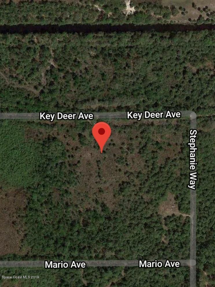 6681 Key Deer Avenue - Photo 1