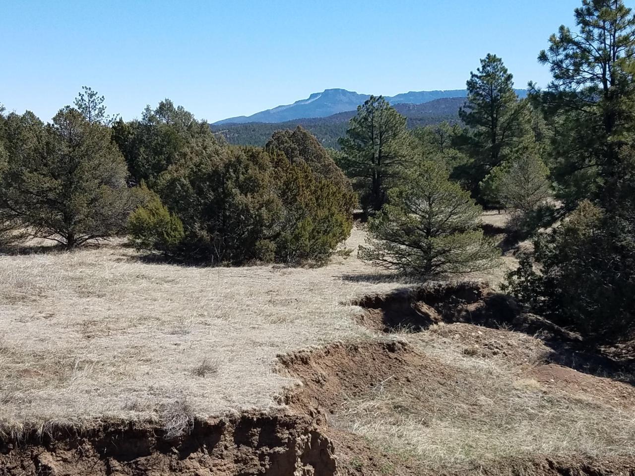 19 Rimrock Canyon Drive - Photo 1