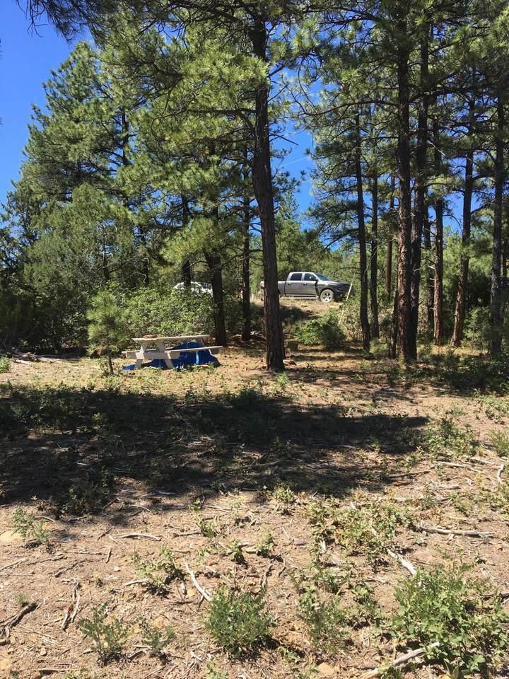 317 Trail Ridge - Photo 1
