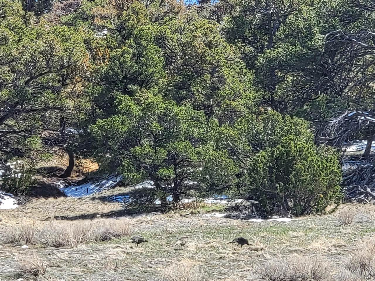 TBD Navajo Ranch Estates - Photo 1