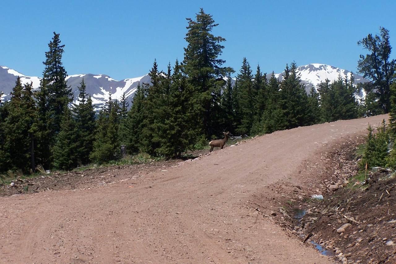 Timber Ridge Trail - Photo 1