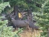 Timber Ridge Trail - Photo 10