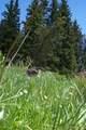 Timber Ridge Trail - Photo 3
