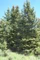 Timber Ridge Trail - Photo 4