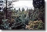 19498 Constanti Ridge Rd - Photo 39