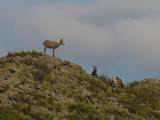 TBD Elk Drive - Photo 17