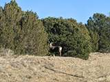 TBD Silver Spurs Ranch - Photo 1
