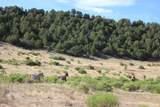 TBD 64 Acres With River - Photo 17