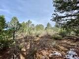 5512 Elk Ridge Trail - Photo 14