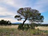 TBD Navajo Ranch Resorts #2 - Photo 11