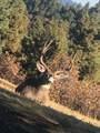 33040 Fisher Peak Pkwy - Photo 87