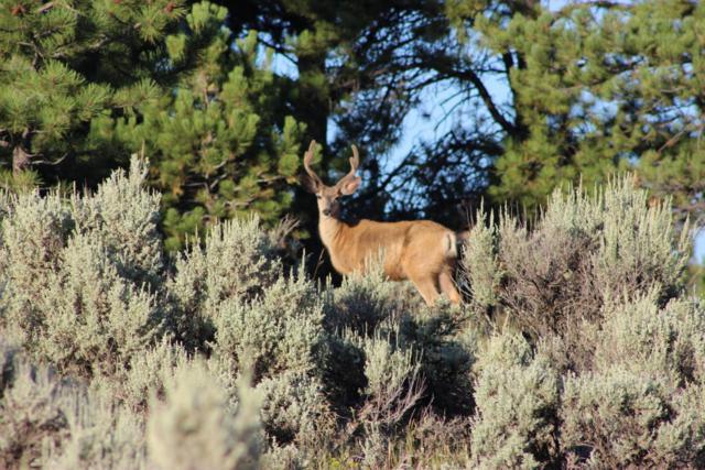 107 Wagon Mesa, Ft. Garland, CO 81133 (MLS #18-8) :: Sarah Manshel of Southern Colorado Realty