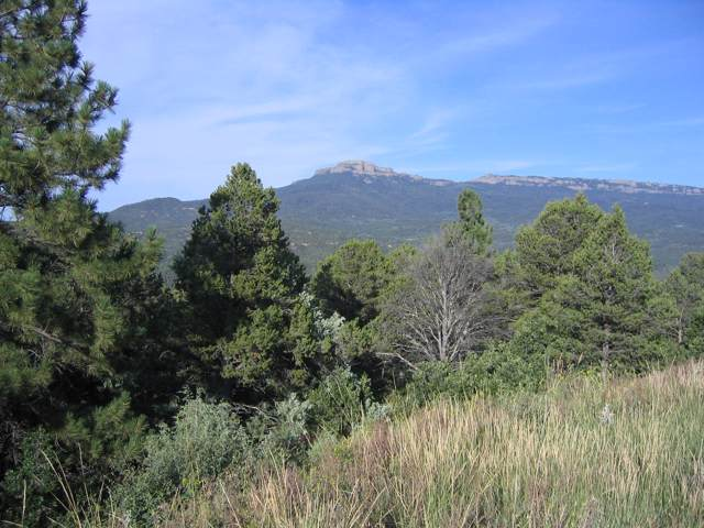 6412 Elk Park Rd, Trinidad, CO 81082 (MLS #19-1062) :: Big Frontier Group of Bachman & Associates