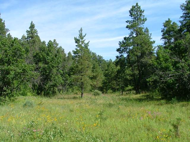 34075 Timber Park Drive Parcel E20, Trinidad, CO 81082 (MLS #19-1300) :: Big Frontier Group of Bachman & Associates