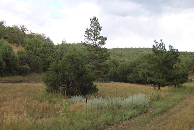 TBD Fishers Peak Ranch Lot M3, Trinidad, CO 81082 (MLS #19-903) :: Big Frontier Group of Bachman & Associates