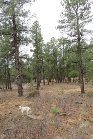 TBD Hidden Canyon Trail Parcel B, Aguilar, CO 81020 (MLS #19-93) :: Big Frontier Group of Bachman & Associates
