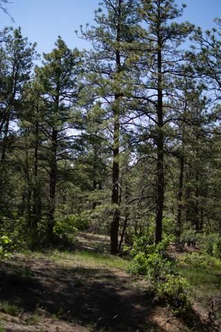 Tree Valley Lane Lot 1166, Weston, CO 81091 (MLS #21-663) :: Bachman & Associates