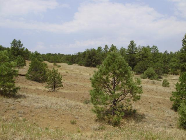Tbd Filing 9 Lot 10, Weston, CO 81091 (MLS #15-962) :: Big Frontier Group of Bachman & Associates