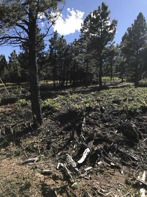 Blackhawk Ranch #104, Walsenburg, CO 81089 (MLS #17-1089) :: Sarah Manshel of Southern Colorado Realty