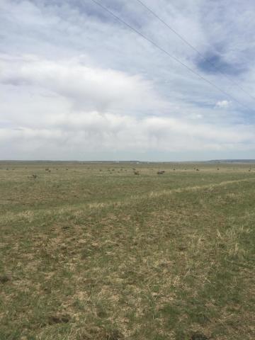 Colorado Buffalo Ranch #54, Walsenburg, CO 81089 (MLS #18-427) :: Sarah Manshel of Southern Colorado Realty
