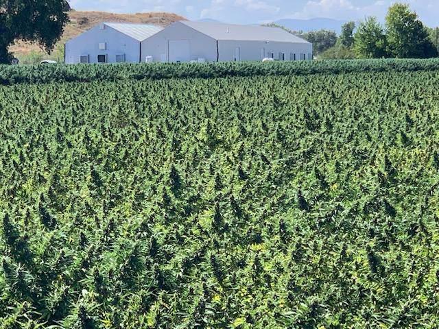 65 Acre Hemp Farm, Pueblo, CO 81006 (MLS #19-1117) :: Big Frontier Group of Bachman & Associates