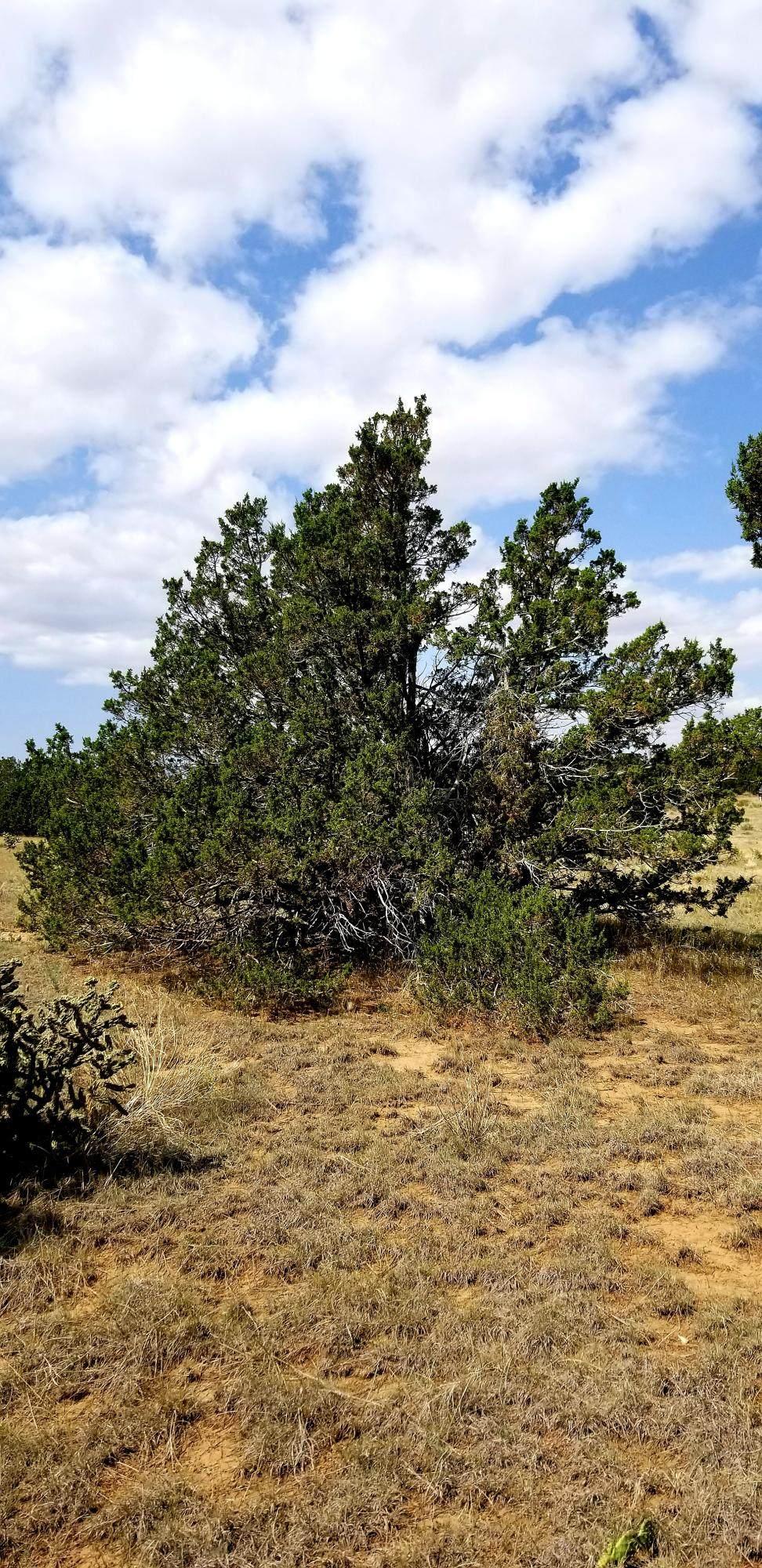 TBD Tres Amigos Trail - Photo 1