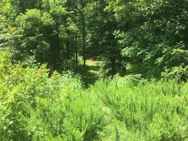 Lot 41 Holmstead Dr., Lake Lure, NC 28746 (#263737) :: Connie Rice and Partners
