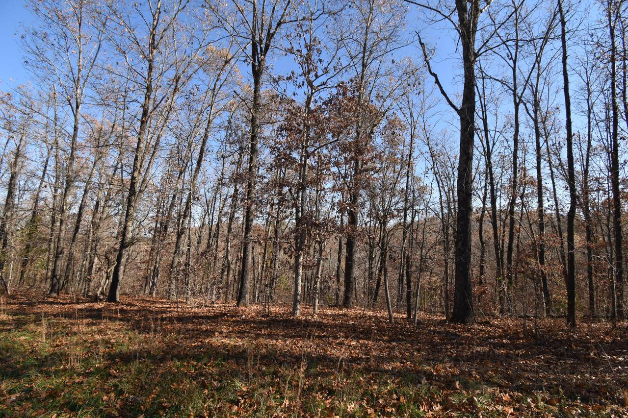 Lot 72 Lost In Woods Lane - Photo 1