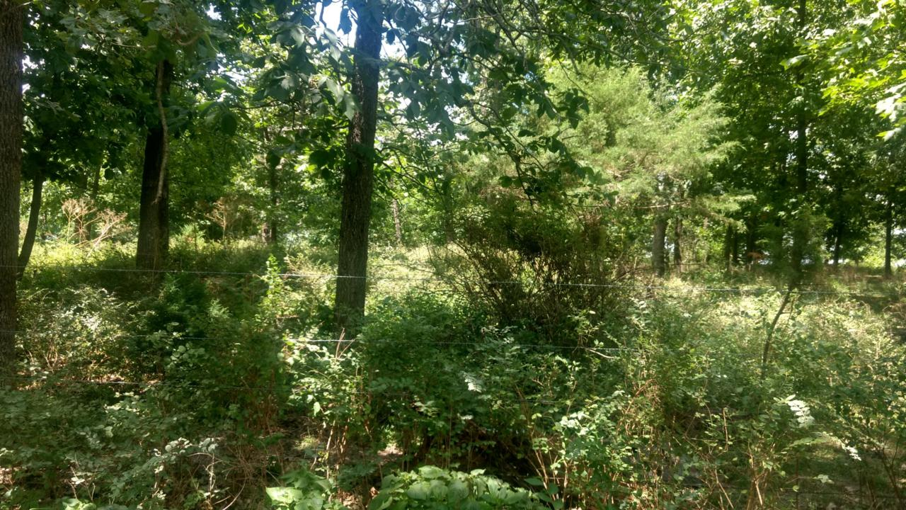 Tract 2 Rosedale - Photo 1