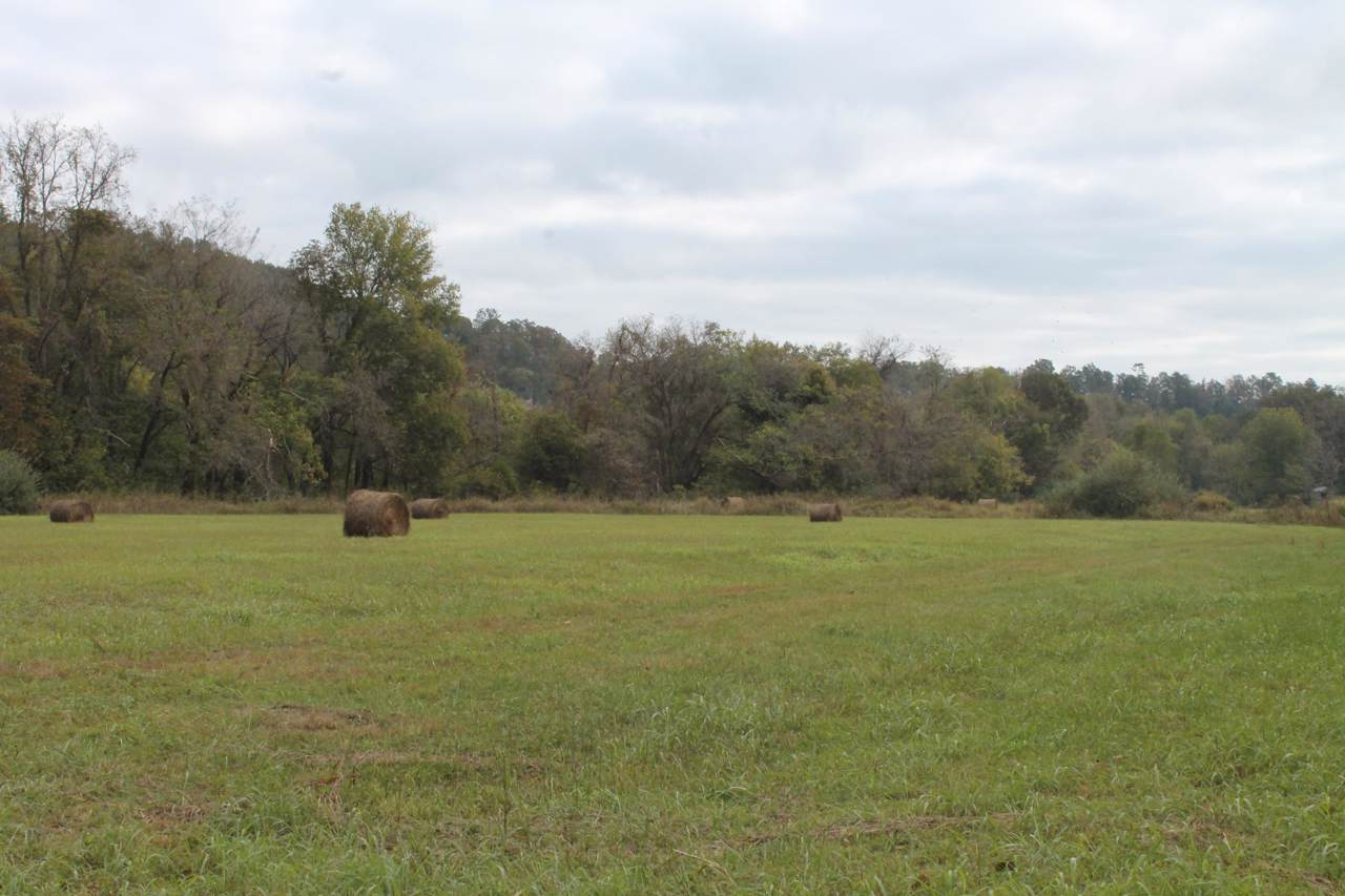 Tbd County Road 334 - Photo 1