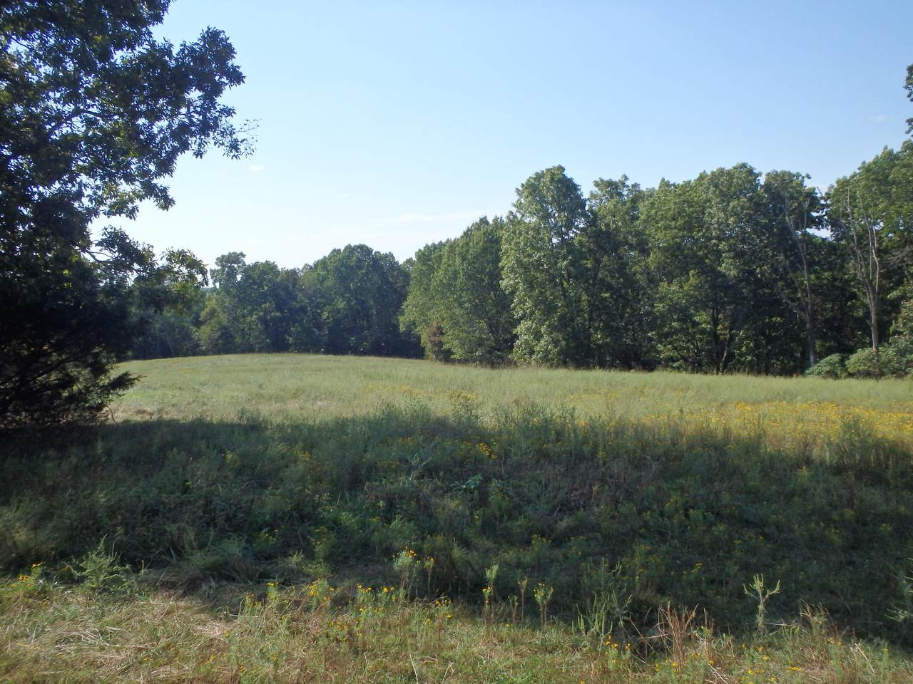 3040 Dogwood Tree Road - Photo 1