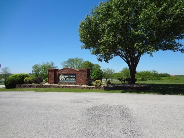Lot 36 Whitetail Drive, Walnut Shade, MO 65771 (MLS #60077251) :: Team Real Estate - Springfield