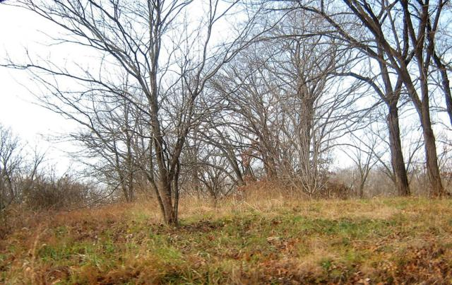 Tbd Oak Ridge Drive Lots 58, 59, 60, Shell Knob, MO 65747 (MLS #60125491) :: Sue Carter Real Estate Group