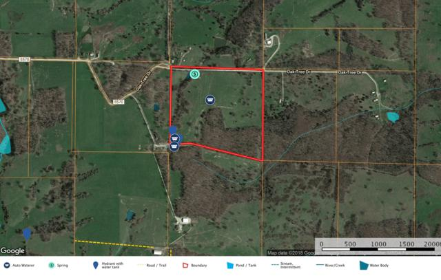 00 Oak Tree Drive, Mountain Grove, MO 65711 (MLS #60133024) :: Team Real Estate - Springfield