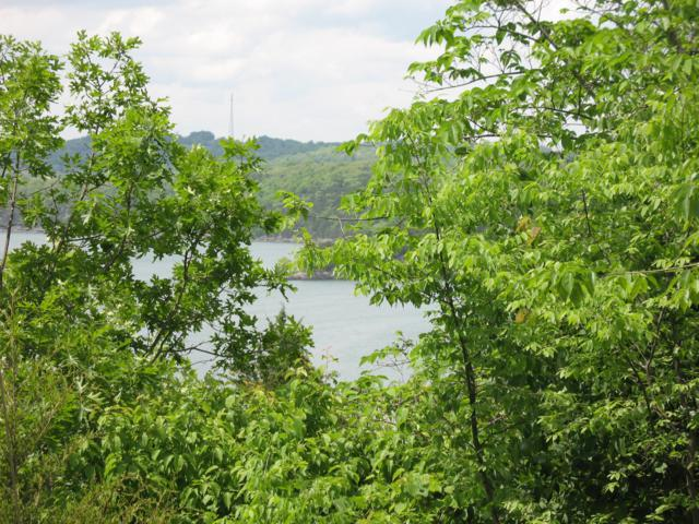 Lot 9 Virgin Bluff Drive, Galena, MO 65656 (MLS #60141662) :: Clay & Clay Real Estate Team