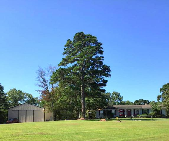 4390 County Road 6180, West Plains, MO 65775 (MLS #60143590) :: Massengale Group
