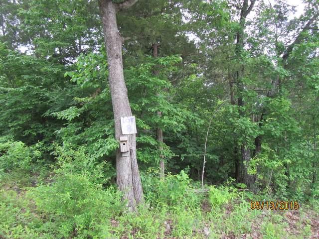 295 Shore Acre Dr. Drive, Powersite, MO 65731 (MLS #60157472) :: Team Real Estate - Springfield