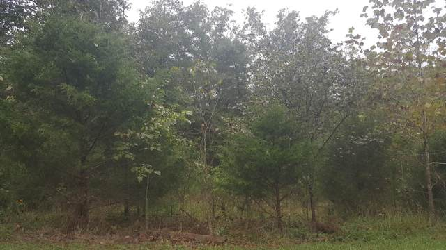Tbd Shore Acre Dr., Powersite, MO 65731 (MLS #60159898) :: Team Real Estate - Springfield