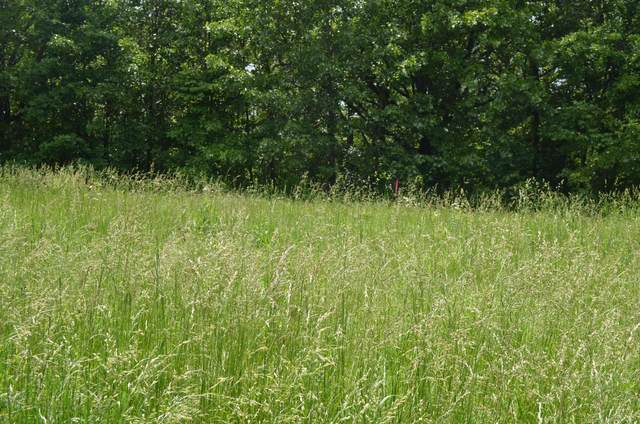 Lot 1-B S Marshfield Road, Bruner, MO 65620 (MLS #60164474) :: The Real Estate Riders